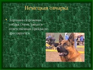 Немецкая овчарка Хорошая сторожевая собака.Очень умная и ответственная.Прекра
