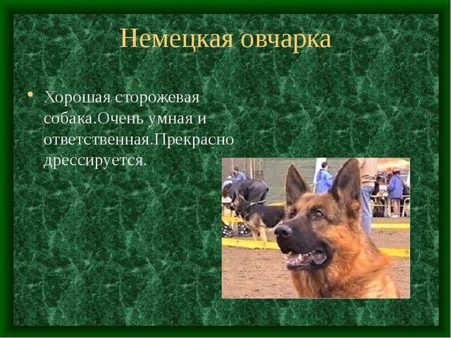 Немецкая овчарка Хорошая сторожевая собака.Очень умная и ответственная.Прекра...