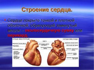Строение сердца. Сердце покрыто тонкой и плотной оболочкой, образующей замкну