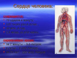 Сердце человека: сокращается: 70 ударов в минуту; 100 тысяч раз в сутки; 40 м