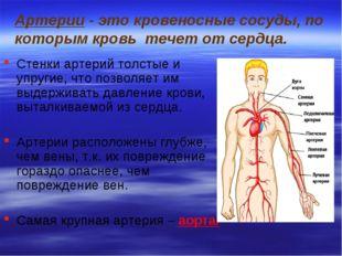 Артерии - это кровеносные сосуды, по которым кровь течет от сердца. Стенки ар