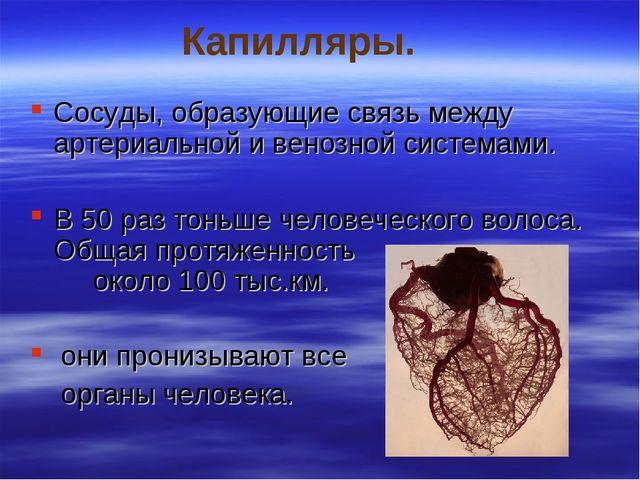 Капилляры. Сосуды, образующие связь между артериальной и венозной системами....