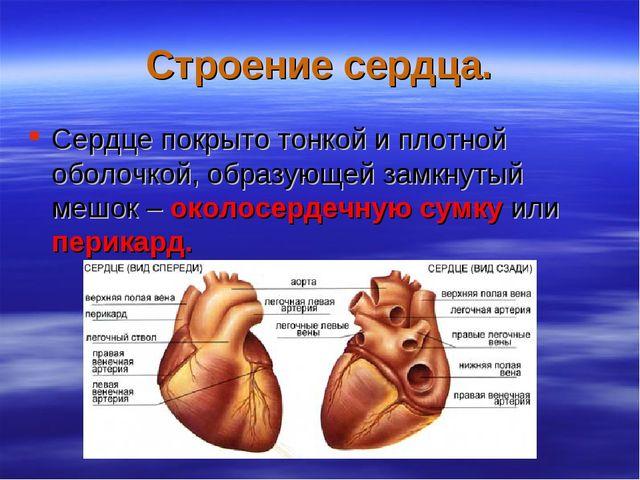 Строение сердца. Сердце покрыто тонкой и плотной оболочкой, образующей замкну...