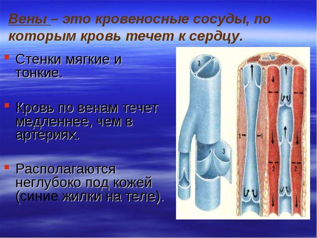 Вены – это кровеносные сосуды, по которым кровь течет к сердцу. Стенки мягкие...