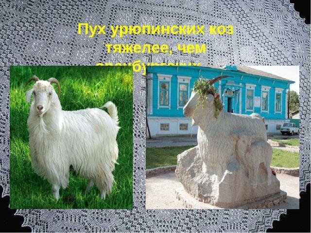 Пух урюпинских коз тяжелее, чем оренбургских…