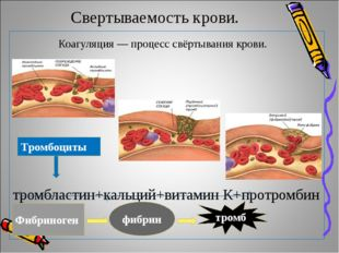 Свертываемость крови. Коагуляция — процесс свёртывания крови. тромбластин+ка
