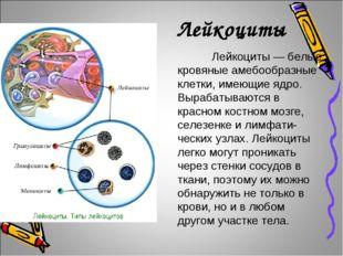 Лейкоциты Лейкоциты — белые кровяные амебообразные клетки, имеющие ядро. Вы