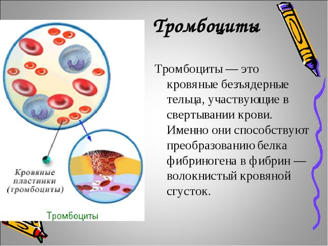 Тромбоциты Тромбоциты — это кровяные безъядерные тельца, участвующие в сверт...