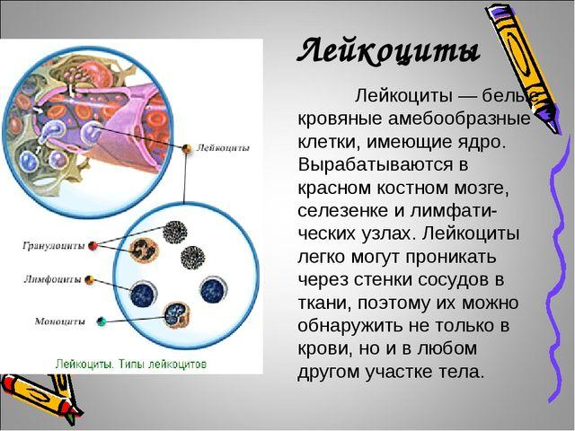 Лейкоциты Лейкоциты — белые кровяные амебообразные клетки, имеющие ядро. Вы...