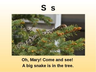 S s Oh, Mary! Come and see! A big snake is in the tree. http://2.bp.blogspot.