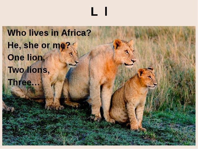 L l Who lives in Africa? He, she or me? One lion, Two lions, Three… http://4....