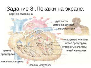 Задание 8 .Покажи на экране. верхняя полая вена дуга аорты легочная артерия л