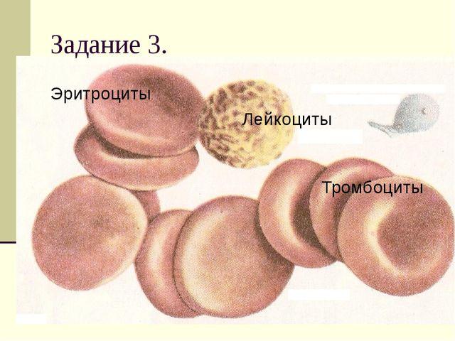 Задание 3. Эритроциты Лейкоциты Тромбоциты