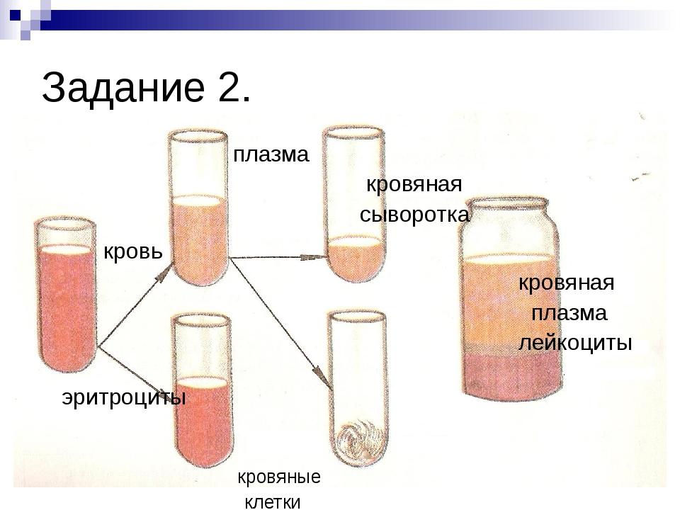 Задание 2. плазма кровяная сыворотка кровь кровяная плазма лейкоциты эритроци...