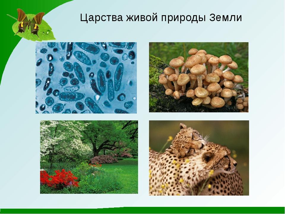 Царства живой природы Земли
