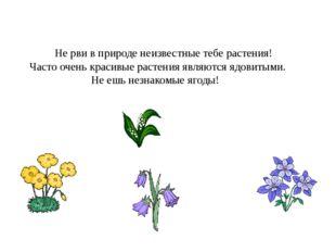 Не рви в природе неизвестные тебе растения! Часто очень красивые растения яв