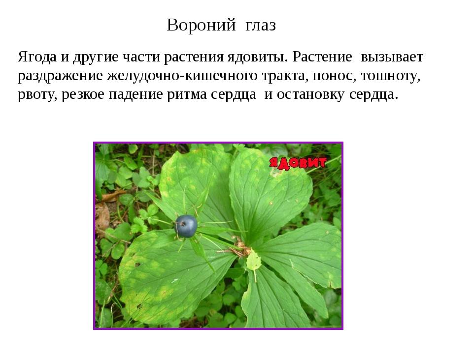 Вороний глаз Ягода и другие части растения ядовиты. Растение вызывает раздраж...
