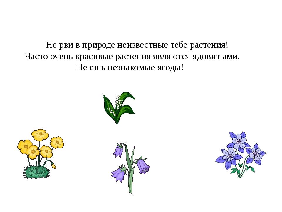 Не рви в природе неизвестные тебе растения! Часто очень красивые растения яв...