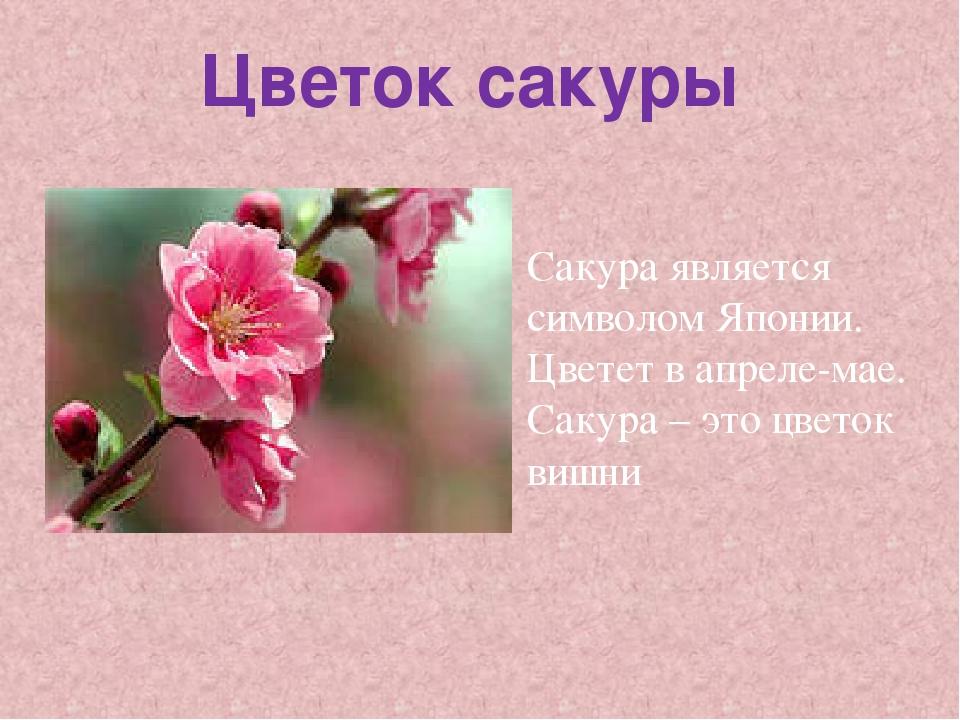 Цветок сакуры Сакура является символом Японии. Цветет в апреле-мае. Сакура –...