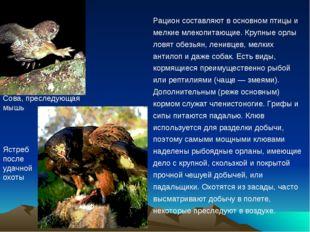 Рацион составляют в основном птицы и мелкие млекопитающие. Крупные орлы ловят