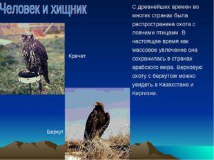 С древнейших времен во многих странах была распространена охота с ловчими пти