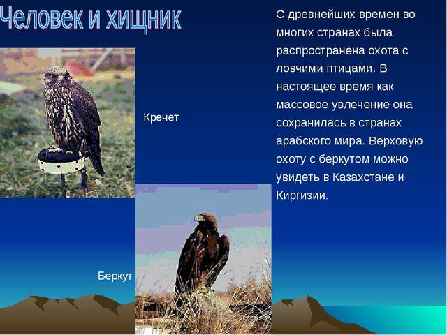 С древнейших времен во многих странах была распространена охота с ловчими пти...