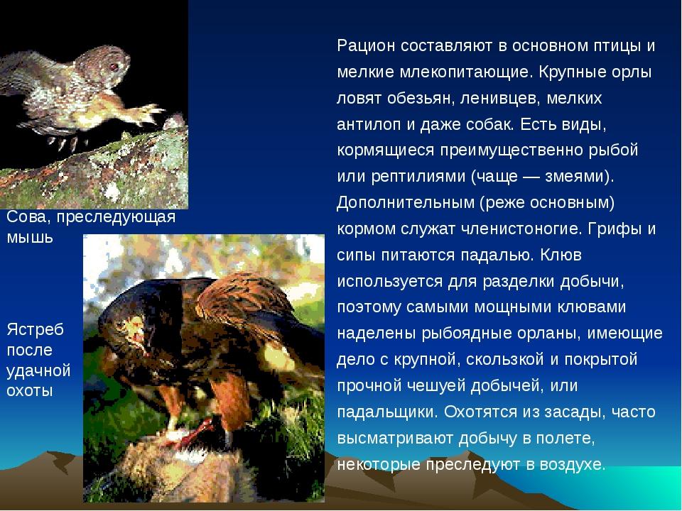 Рацион составляют в основном птицы и мелкие млекопитающие. Крупные орлы ловят...