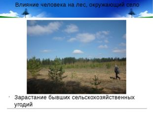 Влияние человека на лес, окружающий село Зарастание бывших сельскохозяйственн
