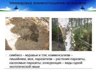 Межвидовые взаимоотношения организмов симбиоз – муравьи и тли; комменсализм –