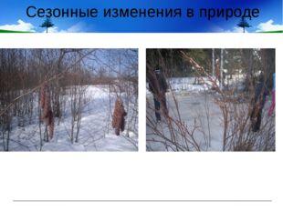 Сезонные изменения в природе