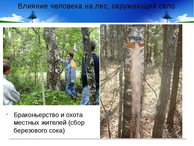 Влияние человека на лес, окружающий село Браконьерство и охота местных жителе...