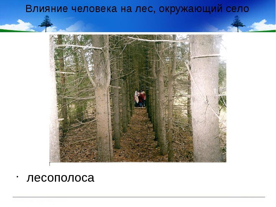 Влияние человека на лес, окружающий село лесополоса