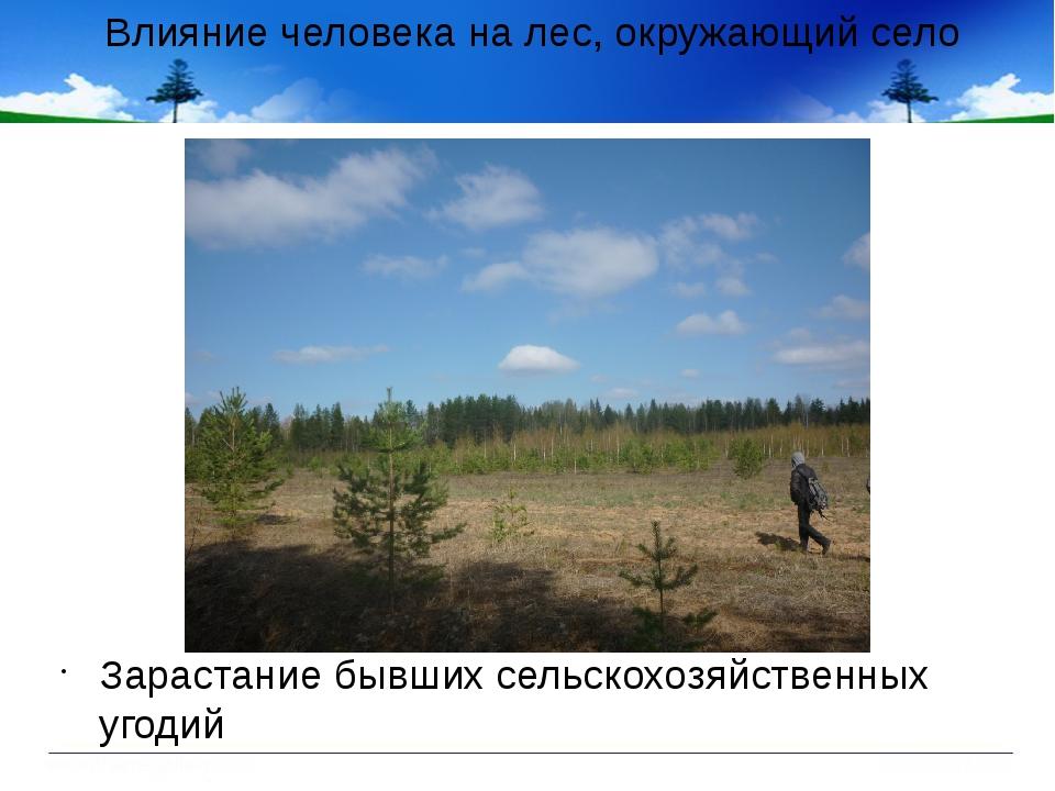 Влияние человека на лес, окружающий село Зарастание бывших сельскохозяйственн...