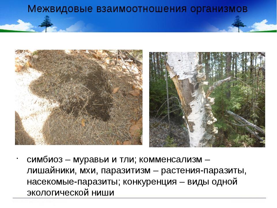 Межвидовые взаимоотношения организмов симбиоз – муравьи и тли; комменсализм –...