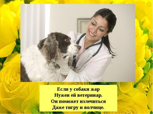 Если у собаки жар Нужен ей ветеринар. Он поможет излечиться Даже тигру и волч...
