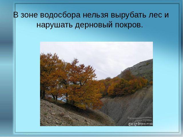 В зоне водосбора нельзя вырубать лес и нарушать дерновый покров.