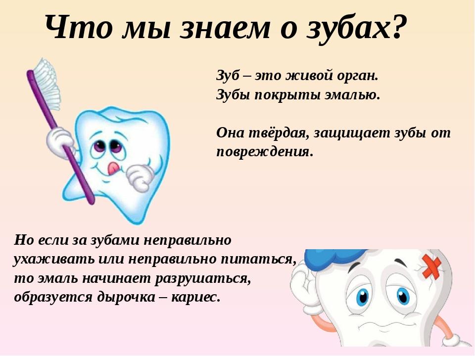 Что мы знаем о зубах? Зуб – это живой орган. Зубы покрыты эмалью. Она твёрдая...