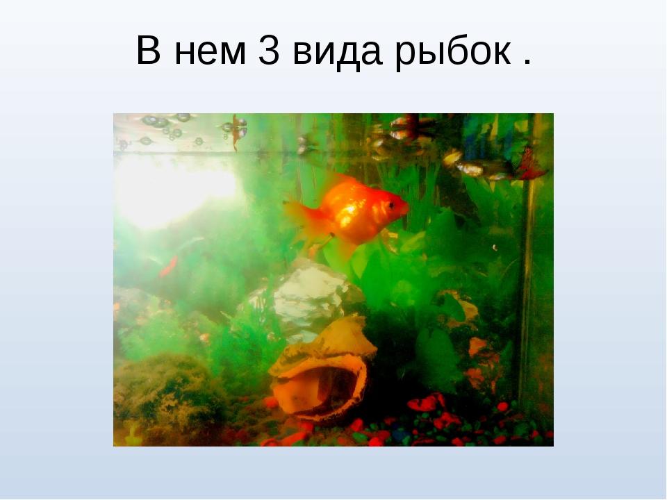 В нем 3 вида рыбок .