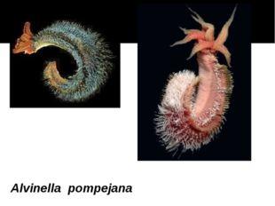 Alvinella pompejana