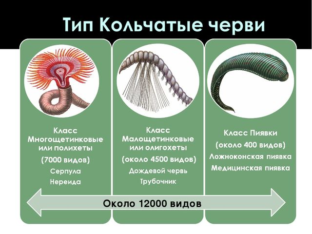 Около 12000 видов