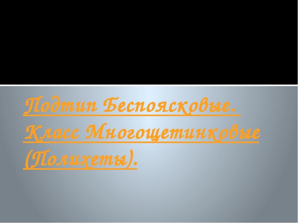 Подтип Беспоясковые. Класс Многощетинковые (Полихеты).