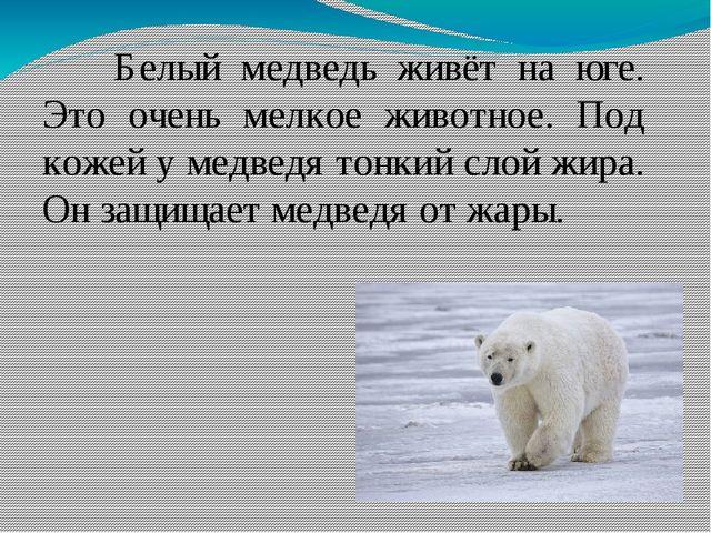 Белый медведь живёт на юге. Это очень мелкое животное. Под кожей у медведя...