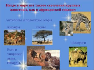 Нигде в мире нет такого скопления крупных животных, как в африканской саванне