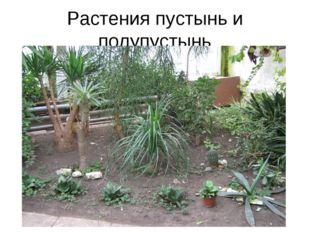 Растения пустынь и полупустынь