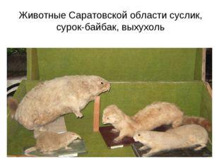 Животные Саратовской области суслик, сурок-байбак, выхухоль