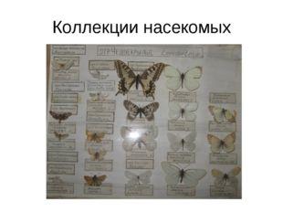 Коллекции насекомых