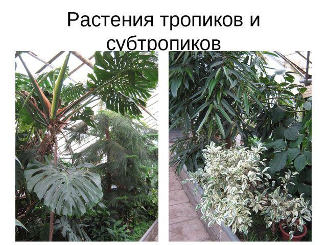 Растения тропиков и субтропиков
