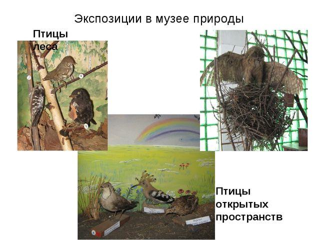 Экспозиции в музее природы Птицы леса Птицы открытых пространств