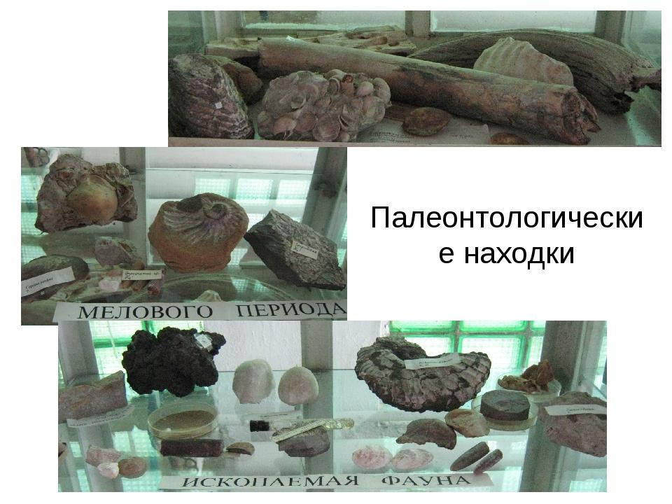 Палеонтологические находки