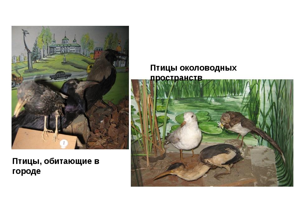 Птицы околоводных пространств Птицы, обитающие в городе
